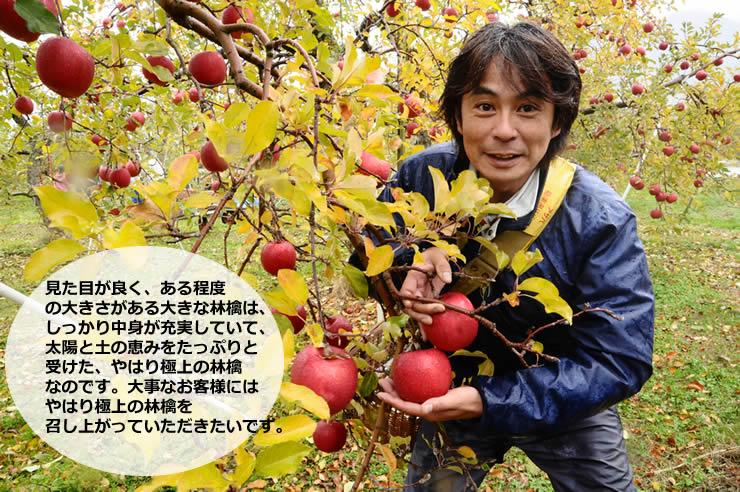 見た目が良く、ある程度 の大きさがある大きな林檎は、 しっかり中身が充実していて、 太陽と土の恵みをたっぷりと 受けた、やはり極上の林檎 なのです。大事なお客様には やはり極上の林檎を 召し上がっていただきたいです。