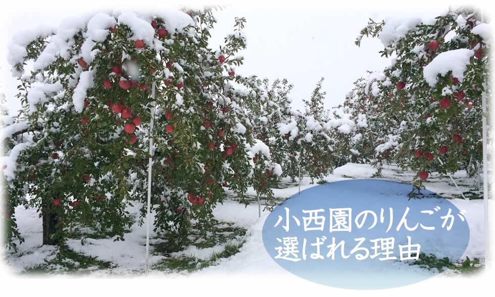 小西園のりんごが 選ばれる理由