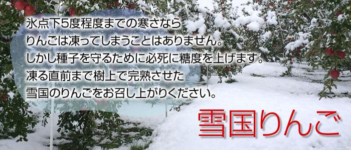 氷点下5度程度までの寒さなら りんごは凍ってしまうことはありません。 しかし種子を守るために必死に糖度を上げます。 凍る直前まで樹上で完熟させた 雪国のりんごをお召し上がりください。