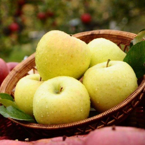 他の写真1: 《搾りたて発送》 森のりんご すりおろしジュース 名月 3本セット
