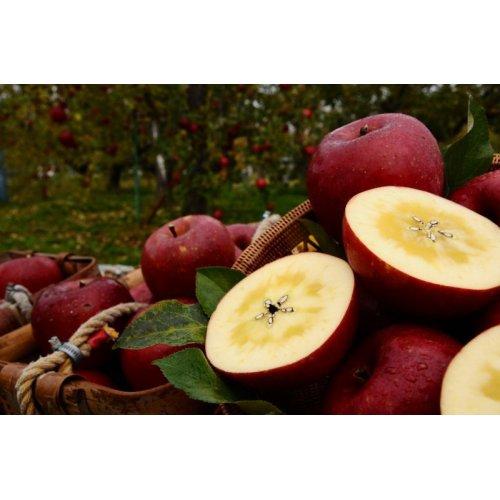 他の写真1: 《搾りたて発送》 森のりんご すりおろしジュース 詰め合わせ 6本セット