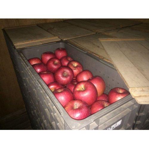 他の写真2: 《搾りたて発送》 森のりんご すりおろしジュース 詰め合わせ 6本セット
