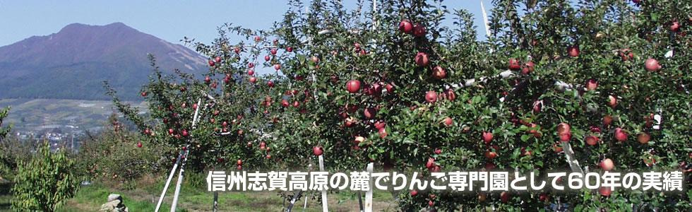 信州志賀高原の麓でりんご専門園として60年の実績