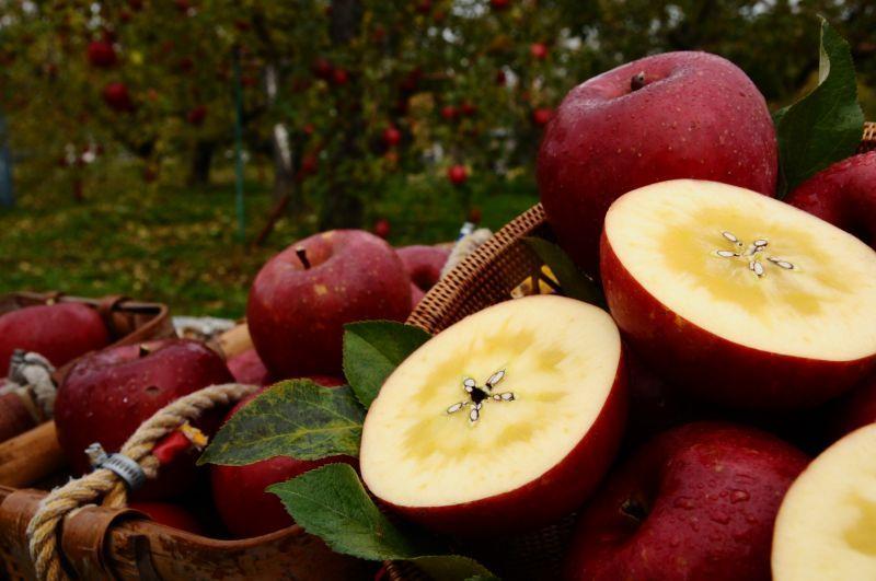 画像: 《搾りたて発送》 森のりんご すりおろしジュース ふじ 3本セット